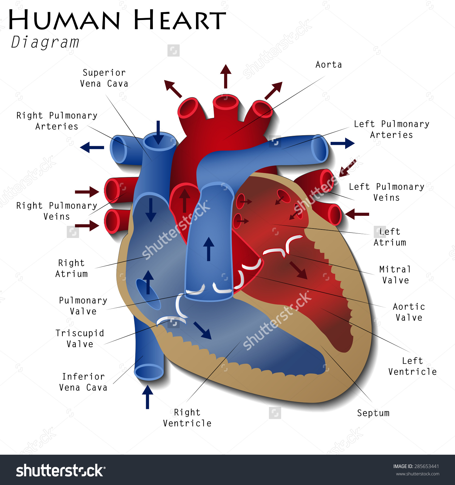 Makes for a first rate heart diagram what makes for a first rate heart diagram ccuart Image collections