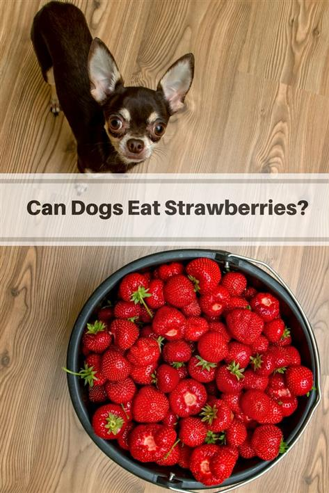 which foods can dogs consume