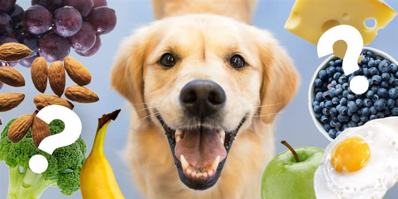 Can Dogs Eat Peaches And Plums