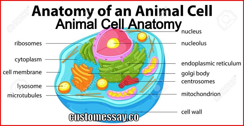 Animal Cell Anatomy