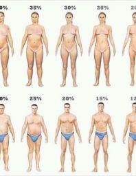 Male's body types?
