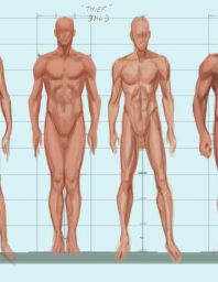 Body Types Male