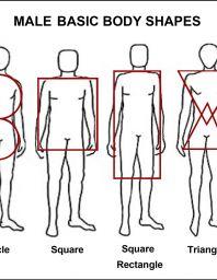 Male's body types