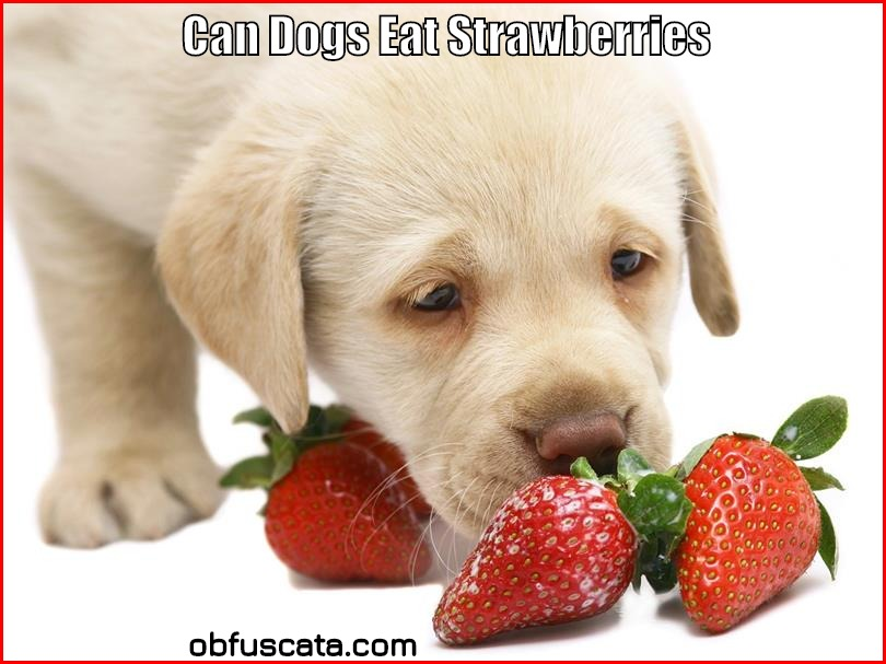 Can Dogs Eat Strawberries